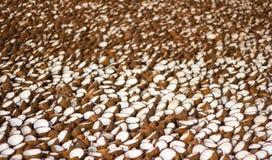 Defekte Kokosnüsse, die in der Sonne für die Extrahierung des Öls von der Kokosnusskopra trocknen stockfotografie