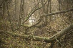 Defekte schwarze Adler-Bäume durch den Fluss Lizenzfreie Stockfotos
