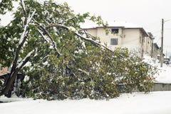 Defekte Walnuss unter dem Schnee Lizenzfreies Stockfoto