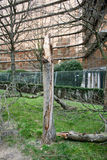 Defekter Baum Lizenzfreie Stockbilder