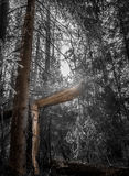 Defekter Baum lizenzfreie stockfotografie