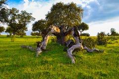 Defekter Baum auf einer bunten Rasenfläche Stockfotografie