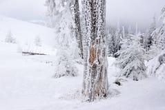 Defekter Baum eingefroren mit Schnee in den nebeligen Bergen Lizenzfreie Stockbilder