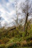 Defekter Baum nach einem Sturm Lizenzfreies Stockfoto