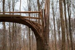 Defekter Baum nach Sturm-Hurrikan oder Blitz Stockbilder