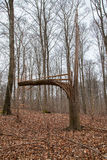 Defekter Baum nach Sturm-Hurrikan oder Blitz Stockbild