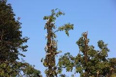 Defekter Baum vorbei durchgebrannt durch schwere Winde am Park Lizenzfreie Stockbilder