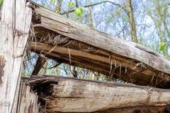 Defekter Baum wegen der Insektenpest Lizenzfreie Stockfotografie