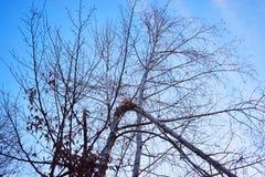 Defekter Baumast gegen den Himmel lizenzfreies stockbild