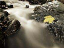 Defektes Ahornblatt Buntes Blatt des Herbstes Schiffbrüchige auf nassem Pantoffelstein im Strom lizenzfreie stockfotos