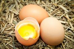 Defektes Ei auf Stroh Stockfoto