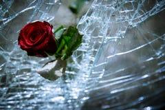 Defektes Glas und Rosen Stockbild