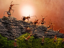 Defence of great wall, ants wars Royalty Free Stock Photo
