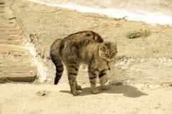 Defensive Katze lizenzfreie stockfotos