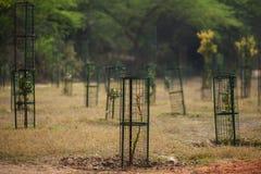 Defesa do metal para as árvores Fotos de Stock Royalty Free