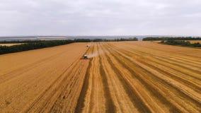 A definição da vista aérea 4k diversa ceifeira de liga moderna recolhe o trigo maduro que sae atrás de uma nuvem da poeira em um  video estoque