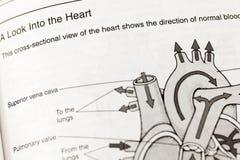 Definição humana da circulação da anatomia do coração imagem de stock royalty free