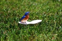 Definizione dell'uccellino azzurro Immagine Stock Libera da Diritti