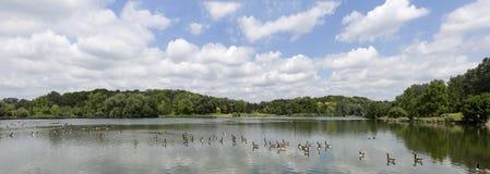 Definizione molto alta Treeline con un cielo blu variopinto fotografie stock libere da diritti