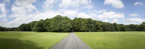 Definizione molto alta Treeline con un cielo blu variopinto immagine stock libera da diritti
