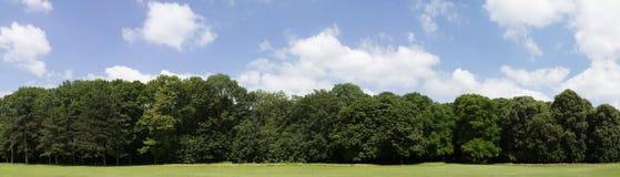Definizione molto alta Treeline con un cielo blu variopinto immagini stock libere da diritti