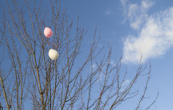 Deflated Tree Balloons, Horizontal Royalty Free Stock Photography