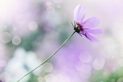 Defocus beautiful floral background. Defocus blur beautiful floral background. Purple spring flower and copy space Royalty Free Stock Photos