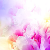 Defocus beautiful pink flowers. abstract design. With color filters royalty free stock image