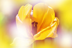 Defocus beautiful yellow flower. Royalty Free Stock Photography