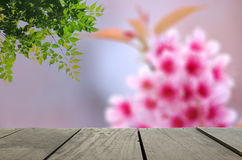 Defocus and Blur background of terrace wood and Spring cherry bl Stock Photography