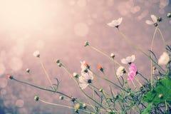 Defocus blur beautiful floral background. P Royalty Free Stock Photo