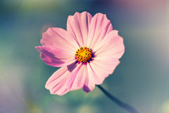 Defocus blur beautiful floral background. Purple spring flower and copy space Stock Photos