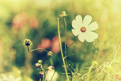 Defocus blur beautiful floral background. Purple and white spring flower and copy space Royalty Free Stock Photo