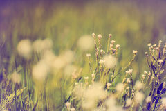 Defocus blur beautiful floral background. Purple and white spring flower on meadow and copy space Stock Photos