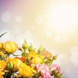Defocus blur bright flowers - roses Stock Images