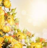 Defocus blur bright flowers - roses Stock Image