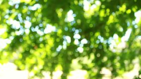 Defocus and blur the green foliage of trees and sunlight. Blinking bokeh from the wind blows. Beautiful sunny day in the forest.  stock footage