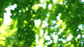 Defocus and blur the green foliage of trees and sunlight. Blinking bokeh from the wind blows. Beautiful sunny day in the forest.  stock video footage
