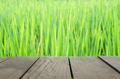 Defocus and blur image of terrace wood and beautiful paddy rice Stock Image