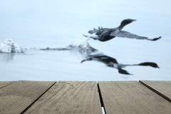 Defocus and blur image of terrace wood and Flying birds in lake. For background usage Stock Photos