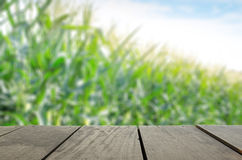 Defocus and blur image of terrace wood and Sweet Corn field in s. Defocus and blur image of terrace wood and Sweet Corn field and flower with bee for background Stock Photos