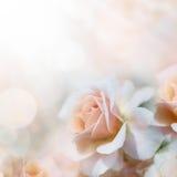 Defocus blur pastel floral background Stock Image