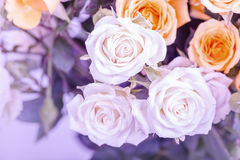 Defocus blur Pastel flowers. Roses on tender background with color filters Stock Photos
