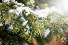 Defocus blur winter background with ice and snow on eve branches royalty free stock photos
