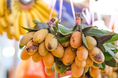 Fresh tropical citrus fruit called Marian Plum in the market. Stock Images