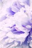 Defocus bzu piękni kwiaty Zdjęcia Stock
