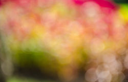 Defocus of color Stock Photos