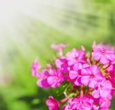 Defocus floral background. Stock Photos