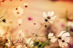 Defocus floral background with unreal colors Stock Photo