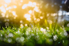 Defocus of Green grass with bokeh for background Royalty Free Stock Photos